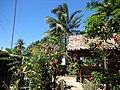 Nipa Hut at the backyard - panoramio.jpg