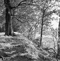 Niveau verschil tussen Corverslaan en 's-Graveland - 's-Graveland - 20084223 - RCE.jpg