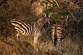 Nkomazi Game Reserve, South Africa (22663991931).jpg