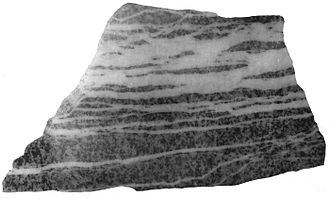 North Star Mine and Powerhouse - North Star sheeted veinlets, polished slab of granodiorite showing sheeted zone of carbonate veinlets.