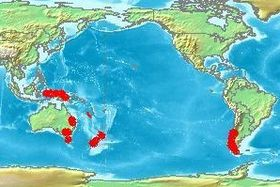 Nothofagus range including New Caledonia.jpg