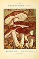Nouvel atlas de poche des champignons comestibles et vénéneux (Pl. 14) (6459627879).jpg