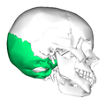 Occipital bone lateral2.png