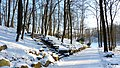 Ogród Botaniczny w Myślęcinku, Bydgoszcz, Polska - panoramio (148).jpg