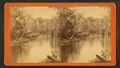 Oklawaha River, Florida. Graham's Landing, looking up, from Robert N. Dennis collection of stereoscopic views.png