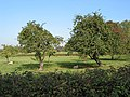 Orchard by the B4063 - geograph.org.uk - 590298.jpg