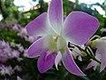 Orchids (2914150893).jpg