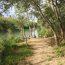 Orilla del río.jpg