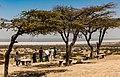 Oromia IMG 5542 Abiata lake (39770318312).jpg