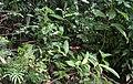 Overbridge rain forest (2720232830).jpg
