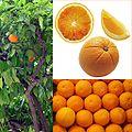 Owoce Pomarańcza.jpg