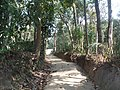 P50 Lawachara National Park, In Moulovibajar, Bangladesh.jpg