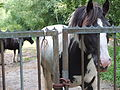 Paarden Blauwe Kamer (Breda) DSCF9261.JPG