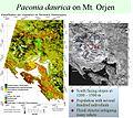 Paeonia daurica distribution Orjen.jpg