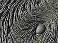Pahoehoe lava - Flickr - pellaea (1).jpg