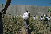 Palestinian children running towards the Israeli West Bank barrier(August 2004).