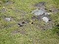Papallona entre el Prat Fondal i l'estany Mal P1300518.jpg