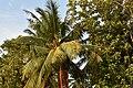 Paradise Resort, Kumbakonam (15) (37236951210).jpg