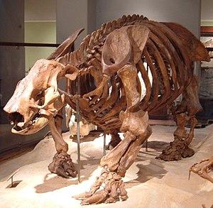 Ground sloth - Paramylodon harlani, Texas Memorial Museum, University of Texas at Austin