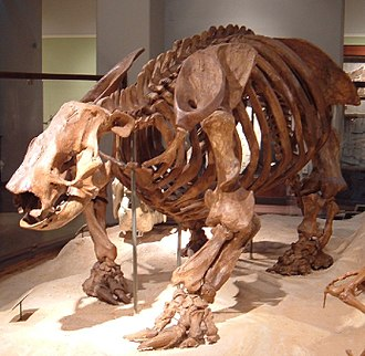 Ground sloth - Paramylodon harlani, Texas Memorial Museum, University of Texas at Austin
