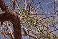 Parc de Timna (Eilat – Israël) (7583255410).jpg