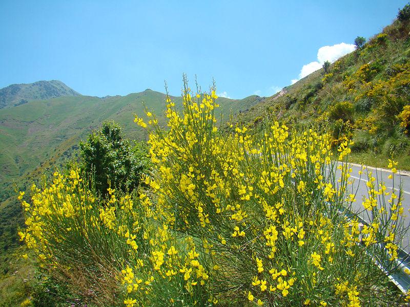 File:Parc national du Djurdjura.jpg