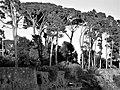 Parchi di Nervi Genova 51.jpg