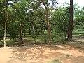 Park around Sheesh Mahal, Shalimar Bagh, Delhi 01.jpg