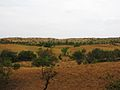 Parque nacional Aguaro-Guariquito 004.jpg