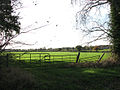 Pasture south of Shotesham Road - geograph.org.uk - 1565690.jpg