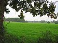 Pastureland by Bull's Wood - geograph.org.uk - 260237.jpg