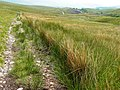 Path on Blea Moor - geograph.org.uk - 1372829.jpg