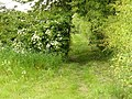 Path through a hedge at Costock - geograph.org.uk - 1333159.jpg