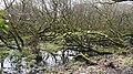 Penrose woodland. - panoramio.jpg