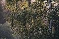 PermaLiv bjørk 29-07-20.jpg