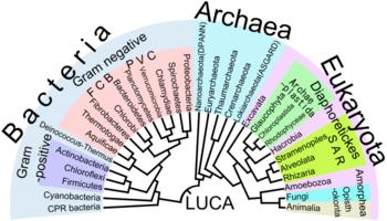 eukaryote wikipedia