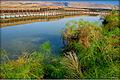 PikiWiki Israel 17345 Hula nature reserve.jpg