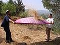 PikiWiki Israel 38213 Throwing wheat .JPG