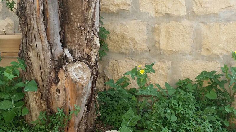 מעט מהצומח