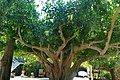 PikiWiki Israel 49902 orthodox church.jpg