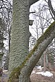 Plāteres pilskalns, Madlienas pagasts, Ogres novads, Latvia - panoramio (2).jpg