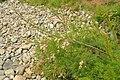 Plant at Venton (7637).jpg