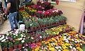 Plant nursery IMG 5978.JPG