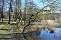 Poertschach Halbinselpromenade Schilfguertel in der Ostbucht 18042013 622.jpg