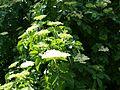 Poltava Botanical garden (146).jpg