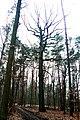 Pomnik przyrody Loskon Stary (4).JPG