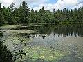 Pond - panoramio (26).jpg