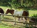 Ponny - panoramio.jpg