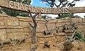 Potgietersrus, South Africa - panoramio (34).jpg