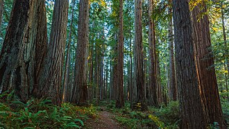 Prairie Creek Redwoods State Park - Image: Prairie Creek Redwoods State Park